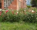 Территория санатория Анапа цветы