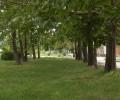 Территория санатория Анапа газоны и деревья